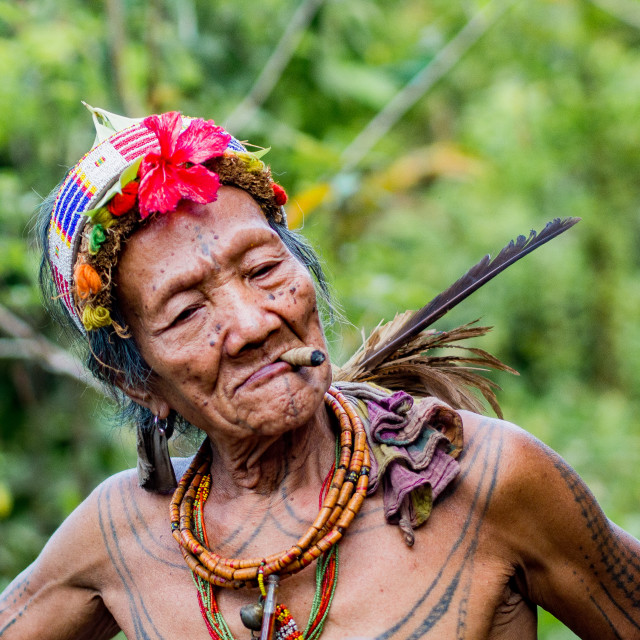 """""""Old man in jungle"""" stock image"""