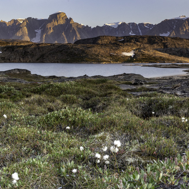 """Wild flowers grace the rugged shoreline"" stock image"