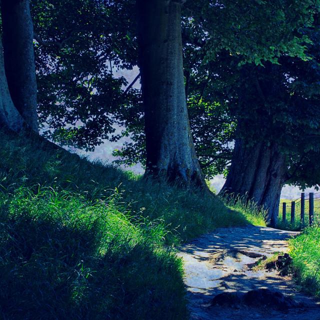 """Sunlit Path - Avebury, Wiltshire"" stock image"