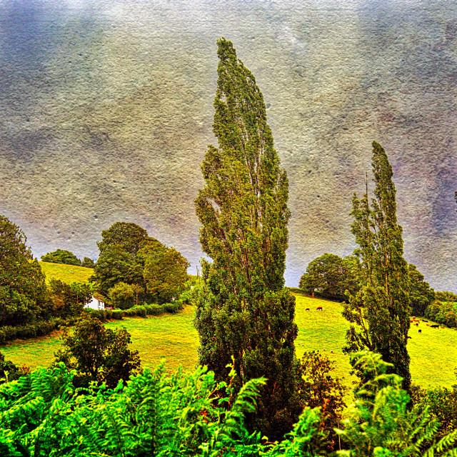 """""""The Three Populars - Garway, Herefordshire"""" stock image"""
