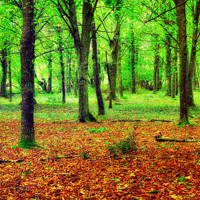 """""""Tangley Woods - Hampshire"""" stock image"""