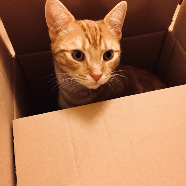 """Cute ginger tabby cat in a box"" stock image"