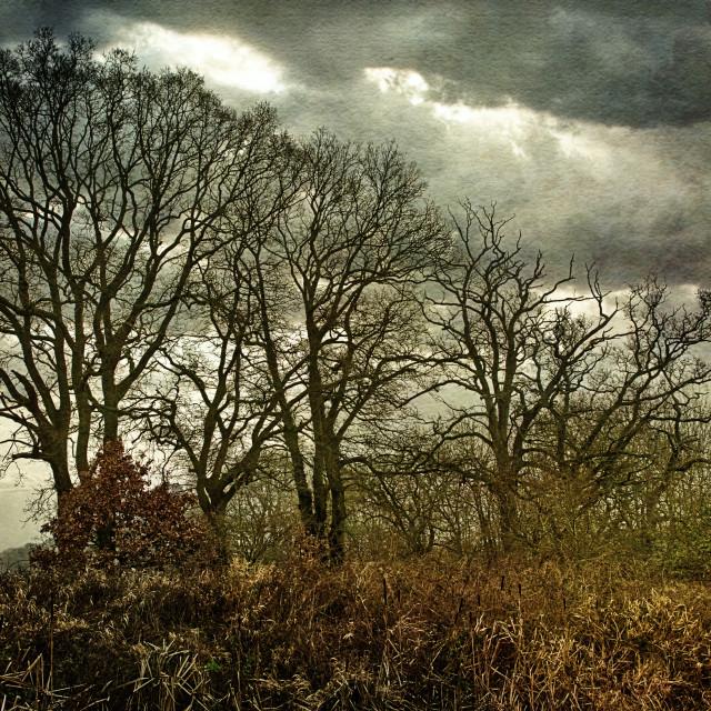 """Tree Silhouettes - Milton Lilbourne, Wiltshire"" stock image"