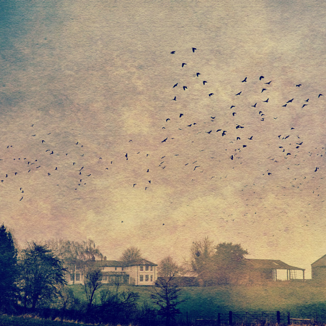 """""""Flock Of crows - Milton Lilbourne, Wiltshire"""" stock image"""