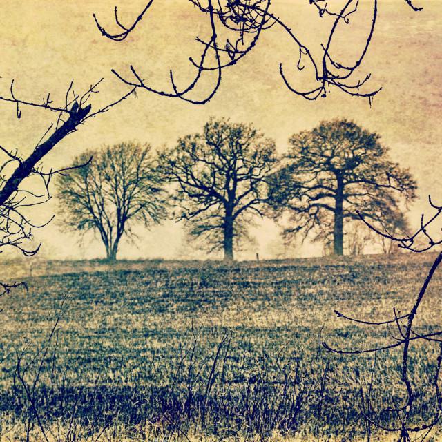"""The Three Trees - Milton Lilbourne, Wiltshire"" stock image"