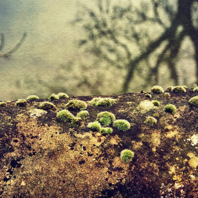 """Canal Bridge Moss #1 - Milton Lilbourne, Wiltshire"" stock image"