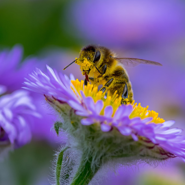 """Bee on flower"" stock image"