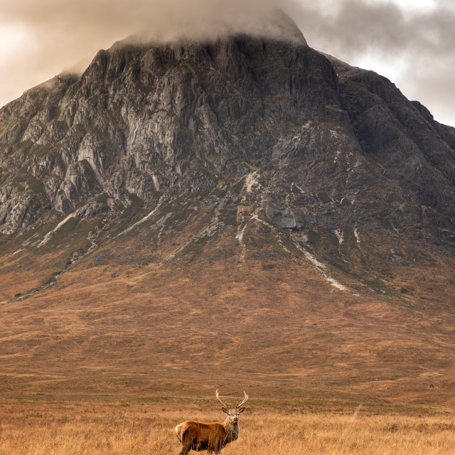 """The Buachaille and the Beast"" stock image"
