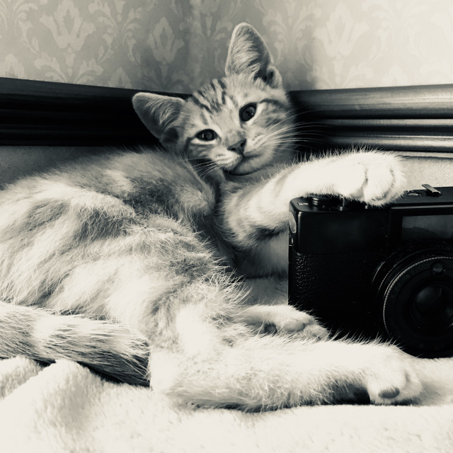 """Cute ginger tabby cat kitten with a camera taking photos"" stock image"