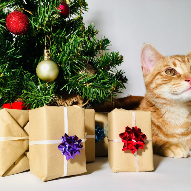 """Young ginger tabby cat sat next to a Christmas tree"" stock image"