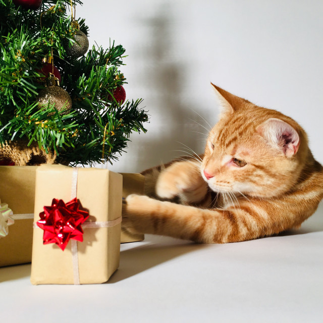 """""""Young ginger tabby cat sat next to a Christmas tree"""" stock image"""