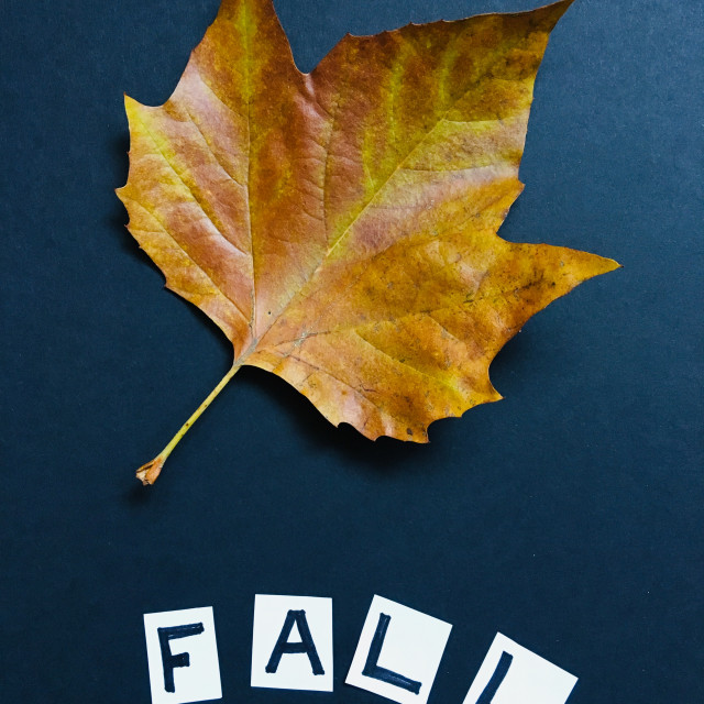 """""""Dried Autumnal leaf with the word fall"""" stock image"""