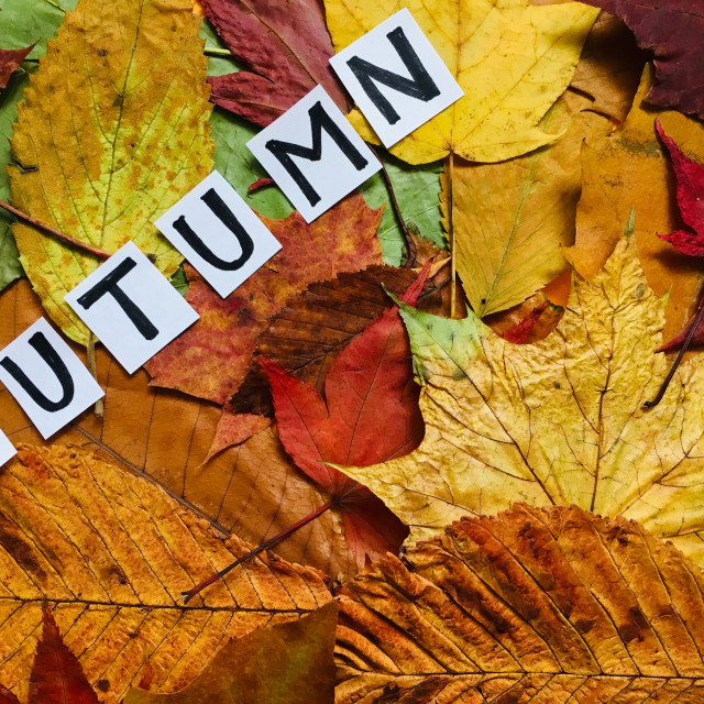 """""""Dried Autumnal leaves with the word autumn"""" stock image"""