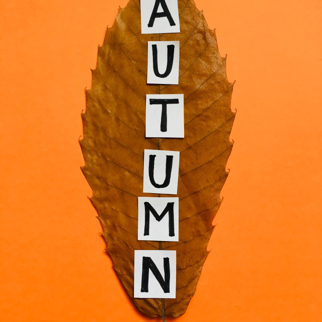 """""""Dried Autumnal leaf with the word Autumn"""" stock image"""