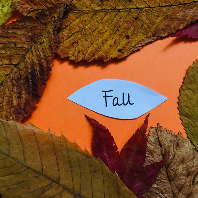 """""""Dried Autumnal leaves"""" stock image"""
