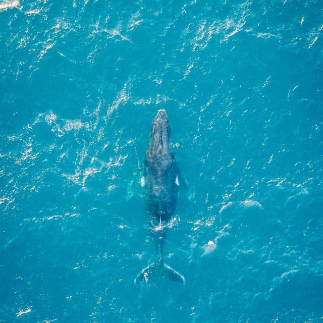 """Australian Whale"" stock image"