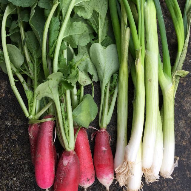 """Home grown radish and spring onions"" stock image"