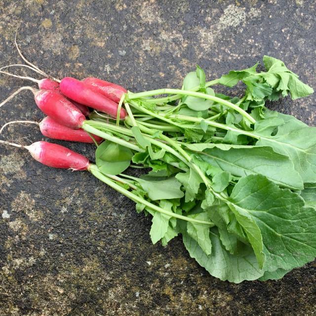 """Home grown radish"" stock image"
