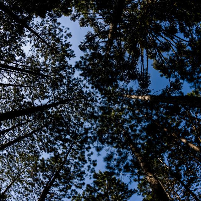"""""""Árvores"""" stock image"""