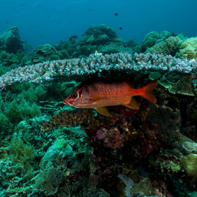 """Peixe sob coral mesa"" stock image"