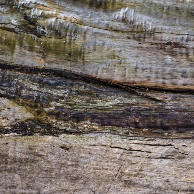 """""""Tronco de árvore"""" stock image"""