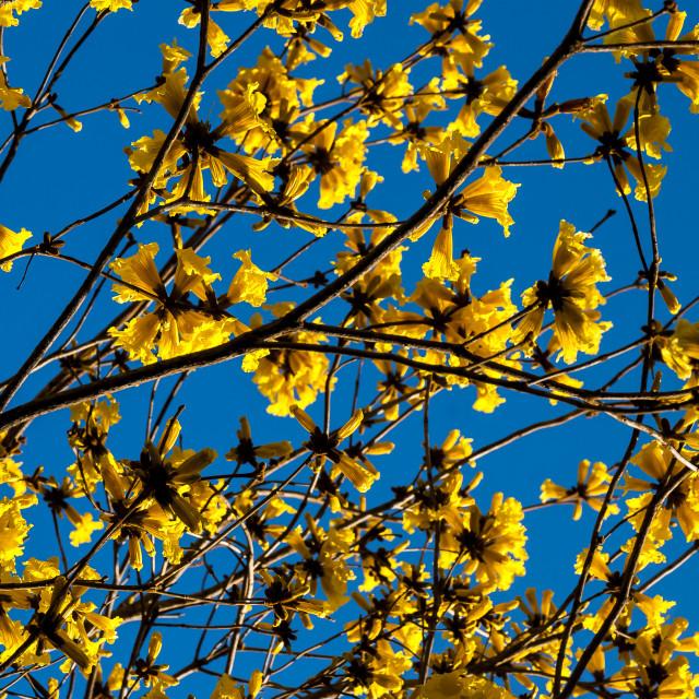 """Flores amarelas"" stock image"
