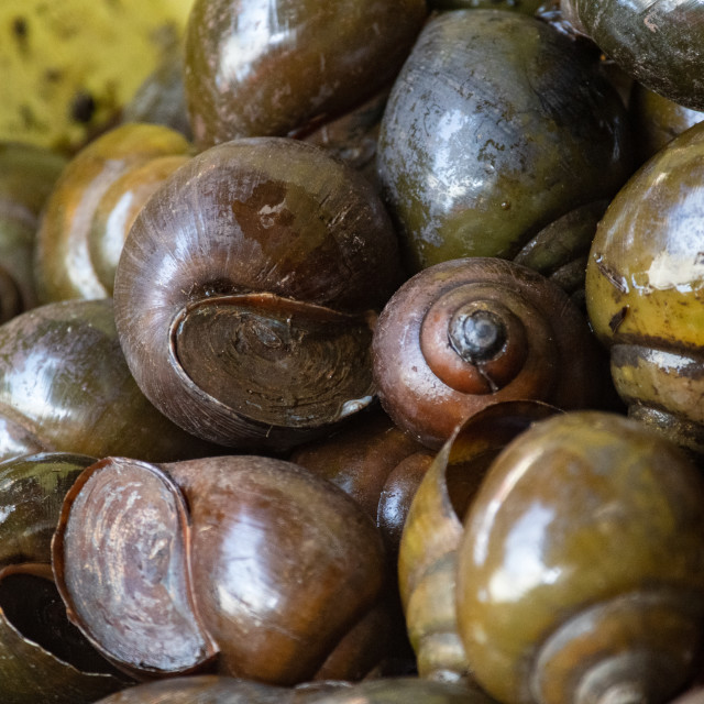"""Snails for sale"" stock image"