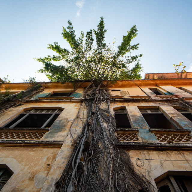 """Tree on Building"" stock image"