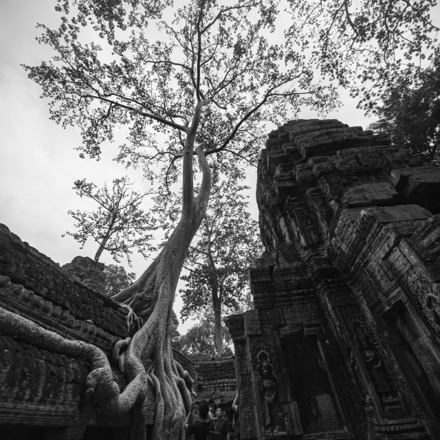 """Ta Prohm Temple"" stock image"