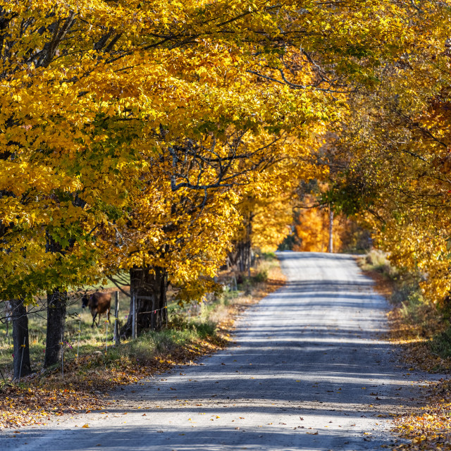 """""""Colorful unpaved country road"""" stock image"""