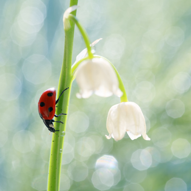"""""""A little red ladybug from my garden"""" stock image"""