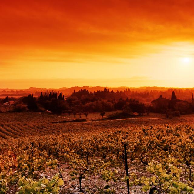 """Sigean vineyard"" stock image"