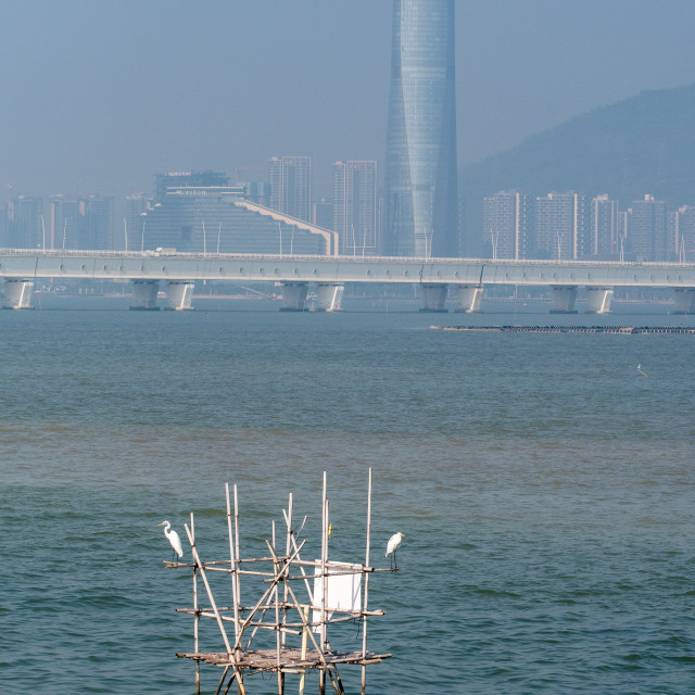 """Egrets in Macau 'Harbour'"" stock image"
