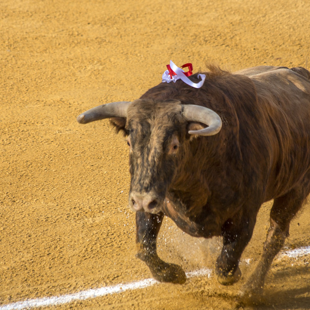 """Raging Bull"" stock image"