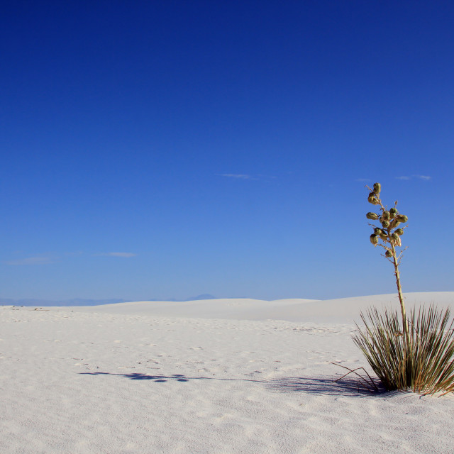 """White Sands"" stock image"