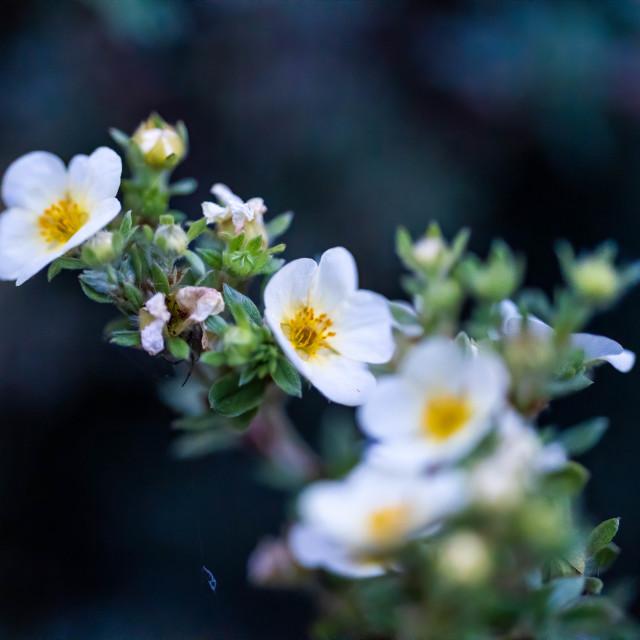 """Macro Flowers."" stock image"