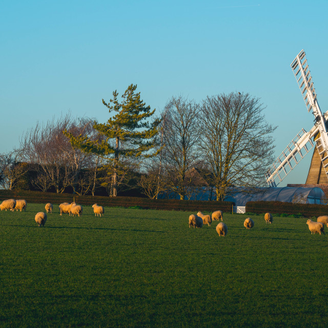 """Fulbourn Windmill Cambridge UK"" stock image"