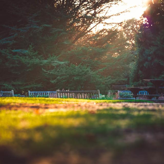 """Golden hour sunset Botanic Garden Cambridge UK."" stock image"