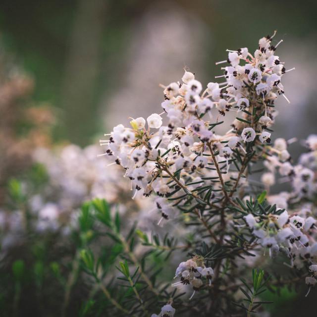 """""""Winter Flower"""" stock image"""