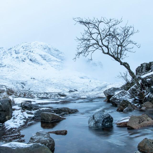 """""""Lone tree at Glencoe"""" stock image"""