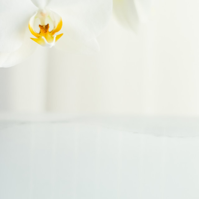 """White orchid flower in bloom, abstract floral blossom art background and..."" stock image"