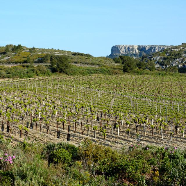 """La Clappe vineyard"" stock image"