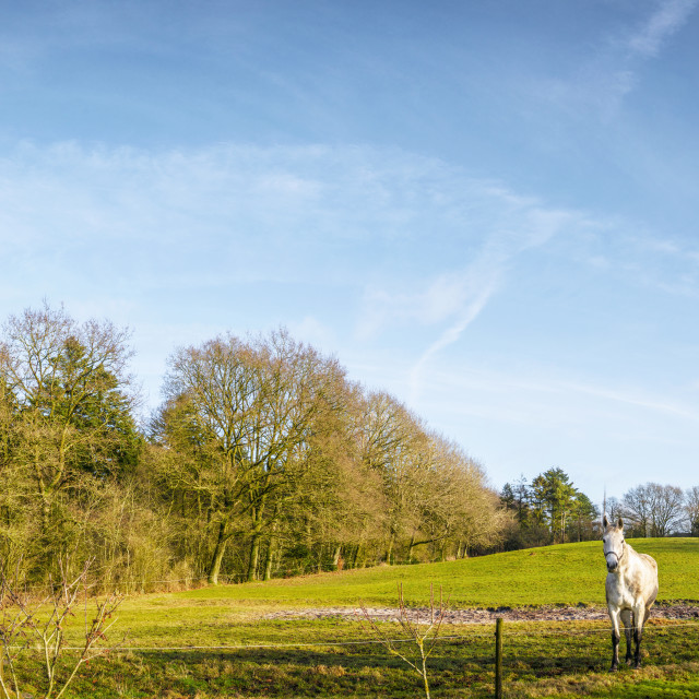 """""""Two horses in a panorama landscape standing"""" stock image"""