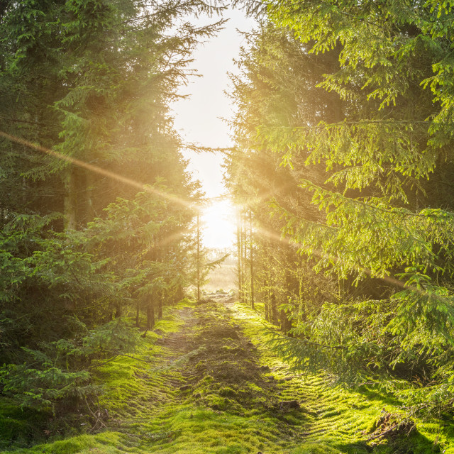 """""""Green forest panorama scenery with sunlight"""" stock image"""