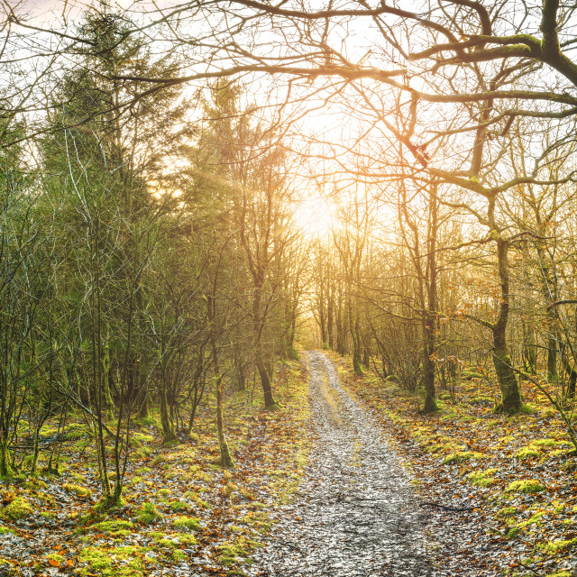"""""""Panorama scenery with a trail going through"""" stock image"""