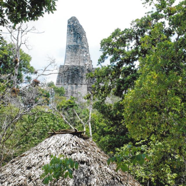 """Tikal."" stock image"
