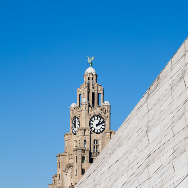 """""""Square crop of the Liverbird"""" stock image"""