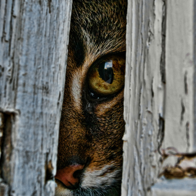 """""""Cat in the Window."""" stock image"""