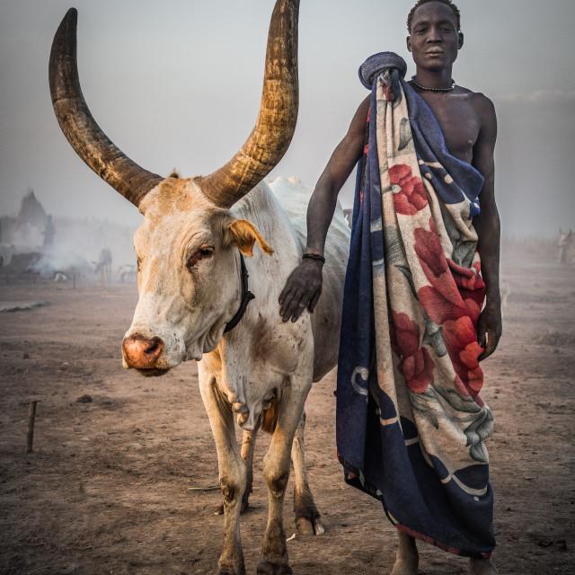 """Mundari man with his watusi"" stock image"
