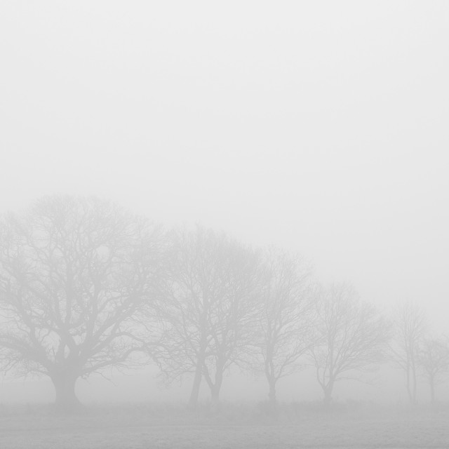 """""""Trees in the mist"""" stock image"""